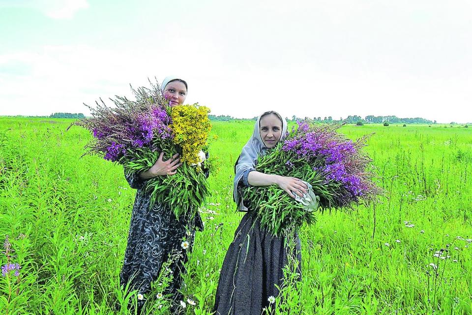 Обезболивающие травы с анастетическим  эффектом