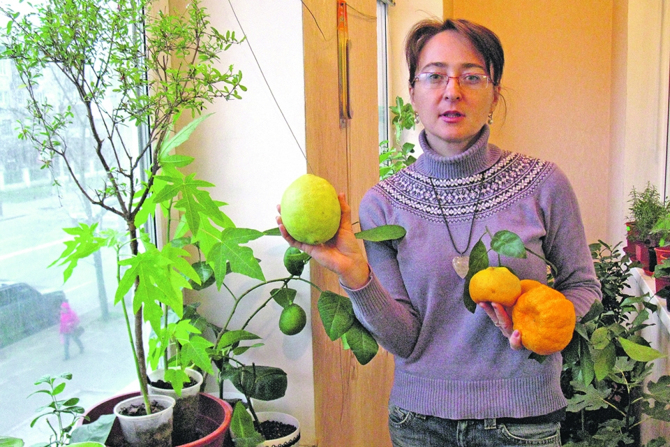 какой экзотический фрукт можно вырастить в квартире том