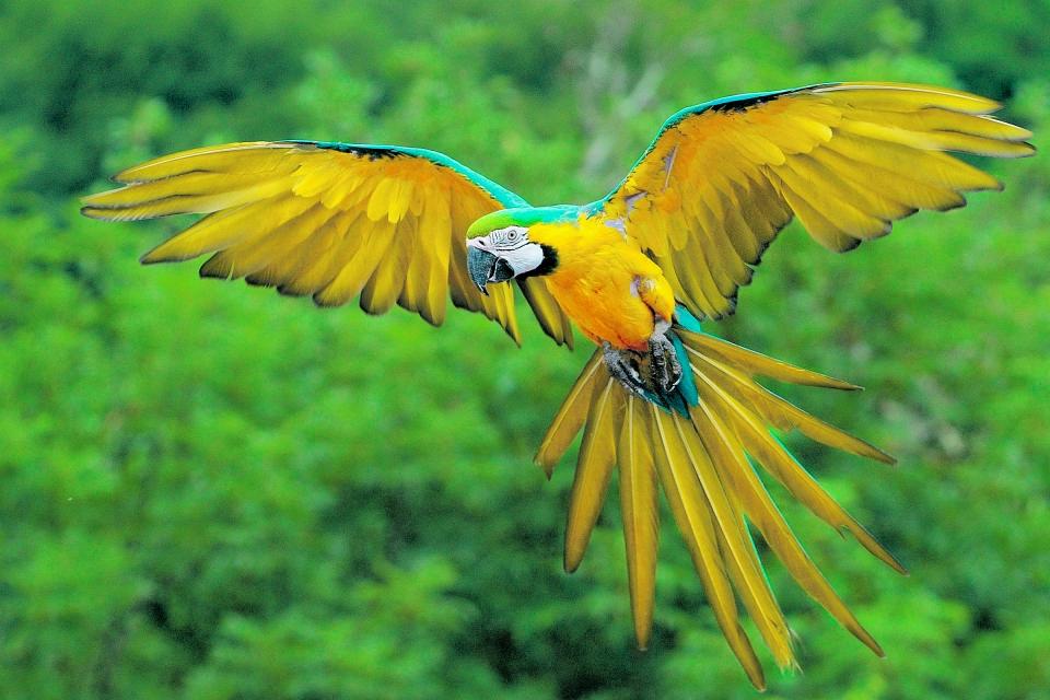 Укрощение крупного попугая. Взгляд | Интернет-издание