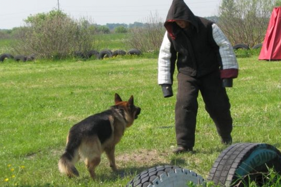 Як тренують найкращу службову собаку України з Івано-Франківська (відеофакт)