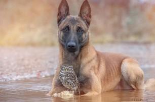 Невероятная дружба птички Польди (Наполеона) и собаки Инго.  Совенок и овчарка, которые не могут прожить...