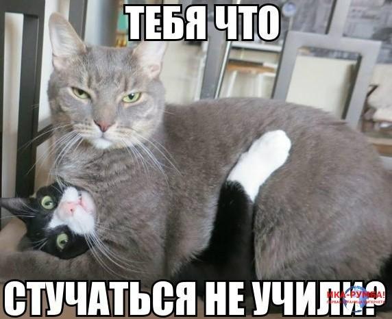 Котов занимаютса сексом
