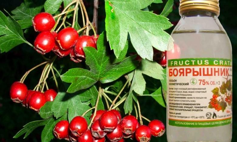 Россиянам посоветовали  пить «боярышник» вместо импортных фармацевтических средств